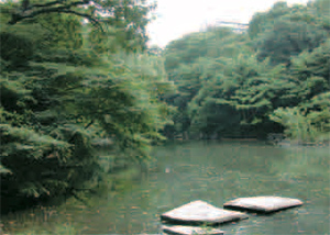 東京大学 三四郎池